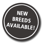 New Breeds Available